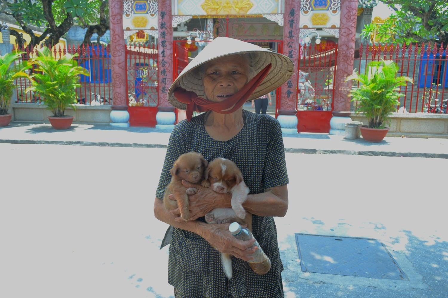 Puppies in Hoi An