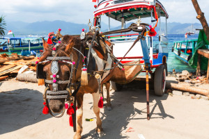 Horse-drawn cart in Gili Trawangan, Indonesia