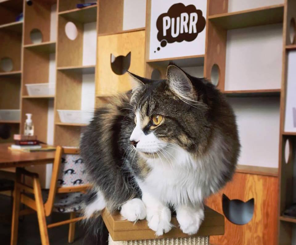 Catfe cat cafe Vancouver best unique