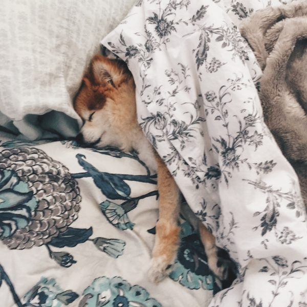 Pom pomeranian cute puppy dog the keay blog vancouver